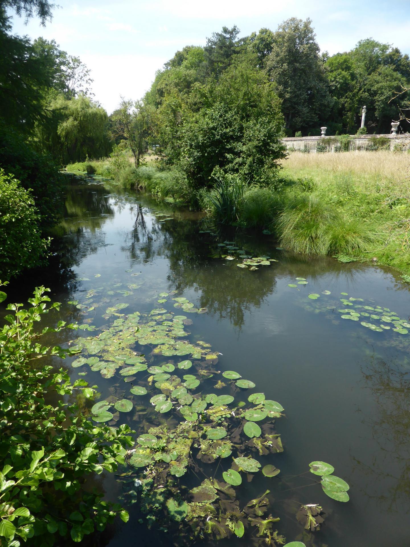 L'Essonne en contrebas du parc, près du potager, cliché Ph. Cachau
